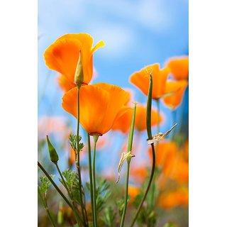 Buy poppy california flower quality flowers seeds online get 58 off poppy california flower quality flowers seeds mightylinksfo