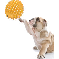 High Quality Natural Rubber Squeaky cum Chew Porcupine Shape Toy for Dog / Puppy / Cat / Kitten (Yellow)