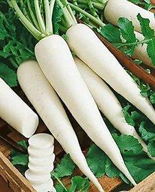 Radish Seeds White (10gm)