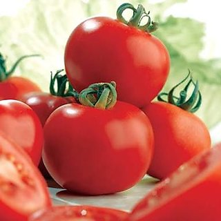 Best Quality Tomato Seeds (10gm)
