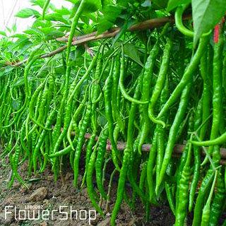 Green Chilli Premium Exotic Seeds