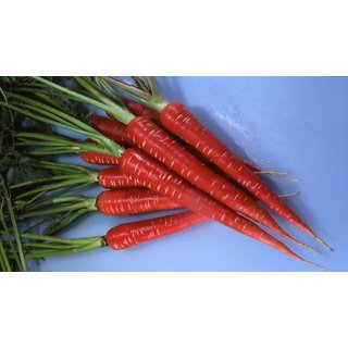 Red Carrot All Need Seeds  For Kitchen Garden
