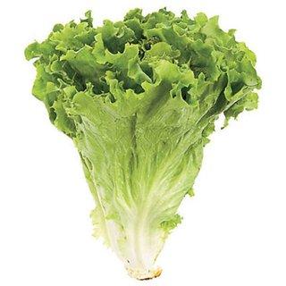 Seeds Lettuce Green Premium Vegetables Seeds