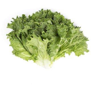 Green Lettuce Leaf Multi-x Quality Seeds For Kitchen Garden