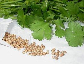 Dhania Seeds Good Quality (10gm)