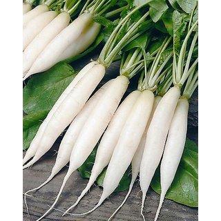Seeds White Radish 10x Quality Seeds For Kitchen Garden