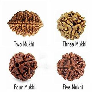 ReBuy Combo of 4 Shiv Rudraksha (2 mukhi, 3 mukhi, 4 mukhi and 5 mukhi-1 piece each)