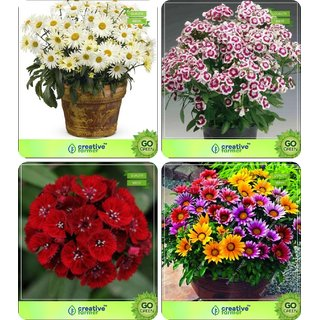 833b45f51b93 Buy Flower Seeds   Seed For Home Garden Combo Daisy- Red