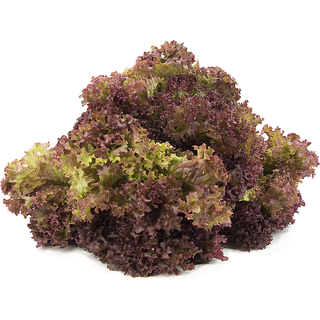 R-DRoz Lettuce Red High Germination Vegetables Seeds