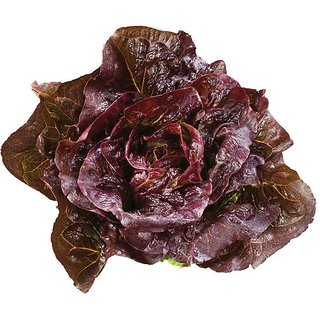 Lettuce Red Leaf 3x Quality Seeds For Kitchen Garden