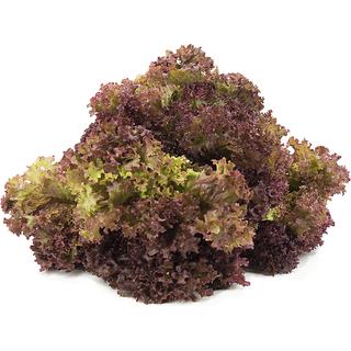 R-DRoz Red Lettuce M Vegetables Seeds