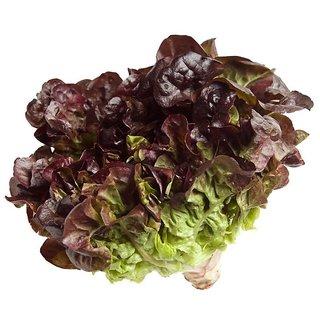 R-DRoz Lettuce Red Exotic Seeds for Kitchen Garden