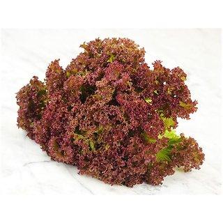 R-DRoz Seeds Lettuce Red Leaf Magni Seeds For Kitchen Garden