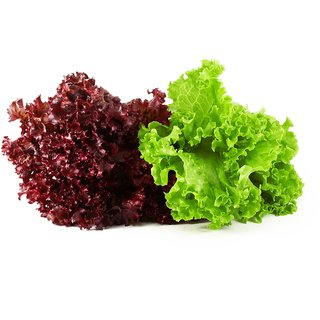 Seeds Red & Green Lettuce Leaf Vegetables Seeds (Combo of 2 Packets; 50 Seeds each Packet; 1 Packet Red Lettuce & 1 Packet Green Lettuce Seeds)