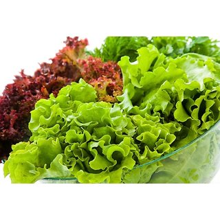 Red & Green Lettuce Leaf Hybrid Vegetables Seeds (Combo of 2 Packets; 50 Seeds each Packet; 1 Packet Red Lettuce & 1 Packet Green Lettuce Seeds)