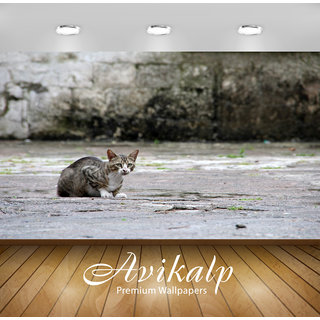 Buy Avikalp Exclusive Premium Cat Hd 3d Wallpapers For Living Room