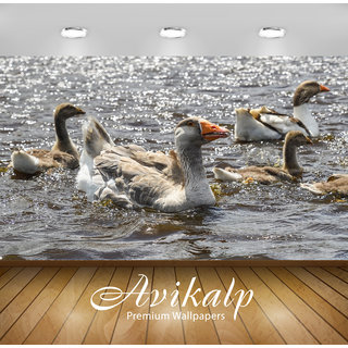 Avikalp Exclusive Premium goose HD 3D Wallpapers for Living room, Hall, Kids Room, Kitchen, TV Background, Office, Shop etc AWI133