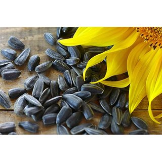 Birds Food - Sun Flower Seed fresh  good quality for Grey Parrot, Sun Conure, Macaw, Cockatoo and Cockatiels