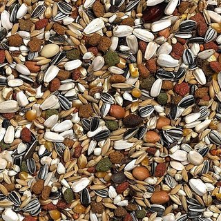 Bird Food Fresh Mix seed imported - 1 kg Good for Macaw, Cockatoo Eclectus  Grey Parrot
