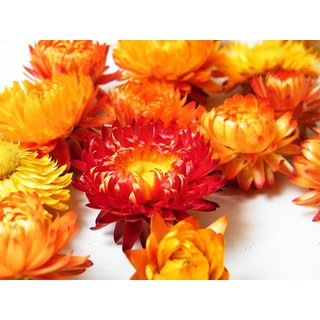 R-DRoz Helichrysum Mixed Colour Flowers- Magnif Quality Seeds - Pack of 35 Seeds