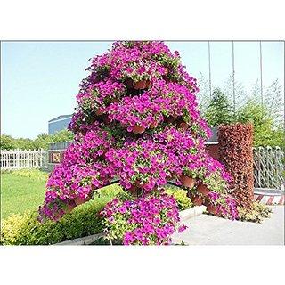 Flower Seeds : Petunia Star Pro Flower Mix Terrace Garden Flower Type Seeds (25 Packets) Garden Plant Seeds By Creative Farmer
