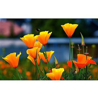Flower Seeds : California Poppy-Mixed Seeds Easy To Plant (19 Packets) Garden Plant Seeds By Creative Farmer