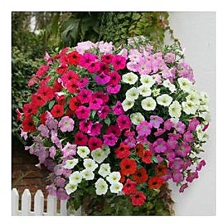 Flower Seeds : Petunia Star Pro Flower Mix Winter Flower Seeds For Home Garden (15 Packets) Garden Plant Seeds By Creative Farmer
