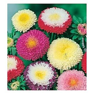Creative Farmer Aster Ducess Formula Mixed Flower Seeds