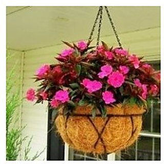 Flower Seeds : Rose Balsam Flower Seeds For Containers (16 Packets) Garden Plant Seeds By Creative Farmer