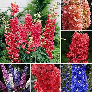Flower Seeds : Delphinium Plant Seeds For Garden (4 Packets) Garden Plant Seeds By Creative Farmer