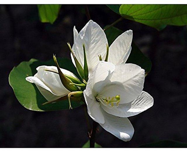 Flowering Plants Kerala - Flowers Healthy
