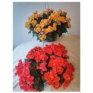 Flower Seeds : Best Hanging Plant Flower Seeds Gift Basket Flower Garden (15 Packets) Garden Plant Seeds By Creative Farmer