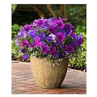 Flower Seeds : Petunia Mix Blue Flower Branded (6 Packets) Garden Plant Seeds By Creative Farmer