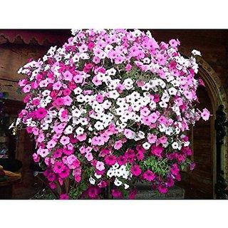 Flower Seeds : Phlox Beauty Mix Flower Seeds Seeds Plants Seeds (8 Packets) Garden Plant Seeds By Creative Farmer