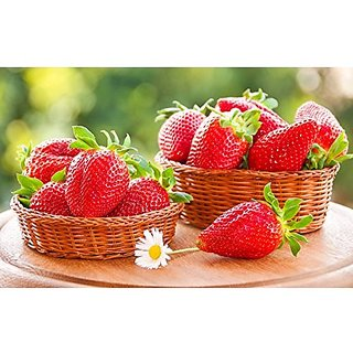 Herbal Plant Seeds - Alpine Strawberry Hybrid Kitchen Garden Pack by Creative Farmer