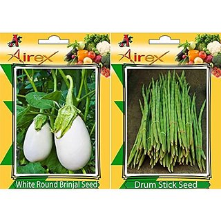 Airex White Round Brinjal And Drum Stick Vegetables Seeds (Pack Of 25 Seeds* 2 Per Packet)