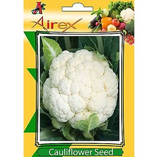Airex Cauliflower Vegetables Seeds (1 Packet Of Cauliflower) Pack Of 50 Seeds*1 Per Packet