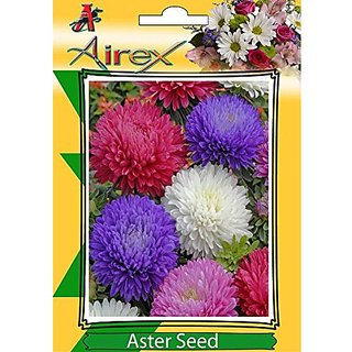 Airex Aster Winter Flower Seeds Pack Of 1 Packet ( Pack Of 50-100 Seeds Per Packet)