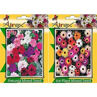 Airex Petunia Mixed And Ice Plant Mixed Flower Seeds (Pack Of 15 Seeds Per Packet)