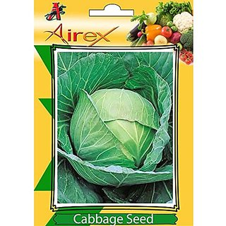 Airex Cabbage Vegetables Seeds (1 Packet Of Cabbage) Pack Of 50 Seeds*1 Per Packet