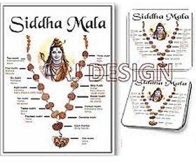 rudraksha (1 to 14 mukhi ) nepal beads siddha mala rudraksha with gauri shanker  ganesha rudraksha