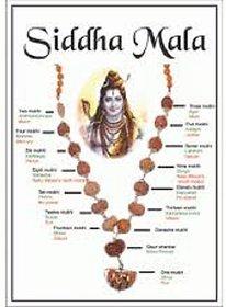 1 to 14 mukhi siddha mala divya shakti rudraksha with gauri shanker  ganesha rudraksha