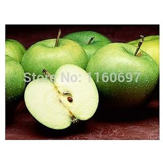 Bonsai Suitable Fruit Seeds : Honeycrisp Apple Tree Sweet Fruit Seeds For  Home Depot Bonsai Suitable Fruit Seeds Pack By Creative Farmer