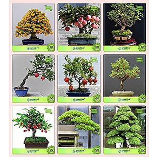 Bonsai Suitable Seeds : Annual Seeds Combo English Walnut, Peach, Guava , Pomagranate Pomagranate Nana,Indian Plum,Chinese Date,Hoop Pine,Cryptomaria Japonica Garden Seeds Pack By Creativefarmer