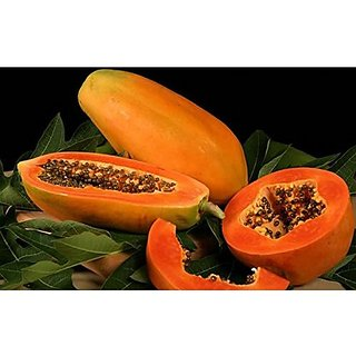 Taiwan Papaya Lady Hybrid Pappaya Seeds Fruit Seeds For Garden Fruit Seeds Garden Pack By Creative Farmer