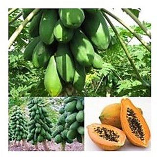 Vegetable Seeds - Papaya Dwarf Variety - Huge Production 50 Seeds Plant Seeds For Garden Fruit Seeds Garden Pack By Creative Farmer
