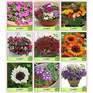 Flower Seeds : Seeds Online Combo Phlox Beauty , Phlox Twinkle, Papaver, Sweet Pea, Sweet Willium-, Venidium-Orange, Venidium-White, Verbena-Ideal, Verbena- Blue Garden Flower Seeds Pack By CreativeFarmer