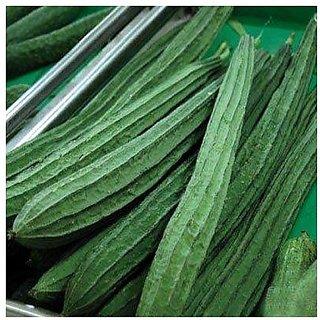 Creative Farmer Vegetable Seeds : Ridge Gourd Seeds - Variety Jaipur Long - Vegetable Seeds For Terrace Garden : Kitchen Garden Pack