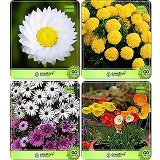 Flower Seeds : Seeds Non Gmo Combo Helichrysam-Dwarf , Marigold-Dhan Basanti, Osteopermum, Papaver Garden Flower Seeds Pack By CreativeFarmer