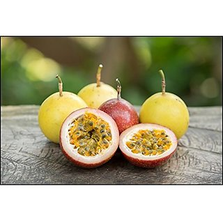 Frui Ty Seeds Exotic Fruit Seeds - Mixed Passion Fruit Seeds Purple And Yellow Fruit Seeds ForHome Garden Organic Fruit Seeds Kitchen Garden Pack By Creative Farmer